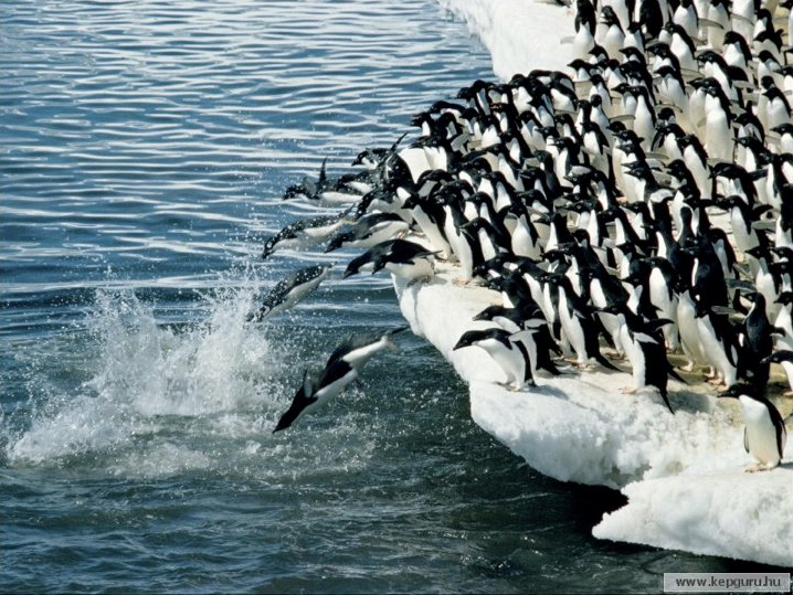 Penguins jumping in water